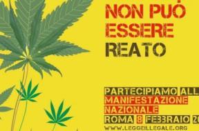 Cannabis - Non è reato