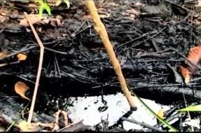 Foresta inquinata Chevron