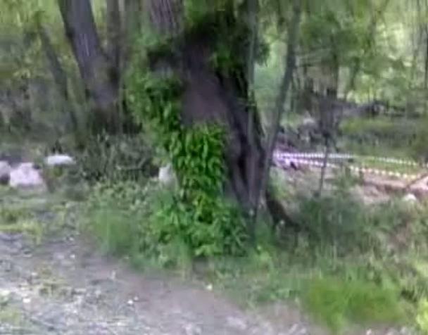 no-tav-gli-alberi-della-valsusa-2