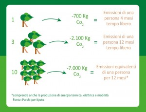 alberi per pantelleria