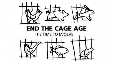 logo end of cage