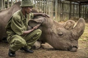 Sudan rinoceronte bianco 2