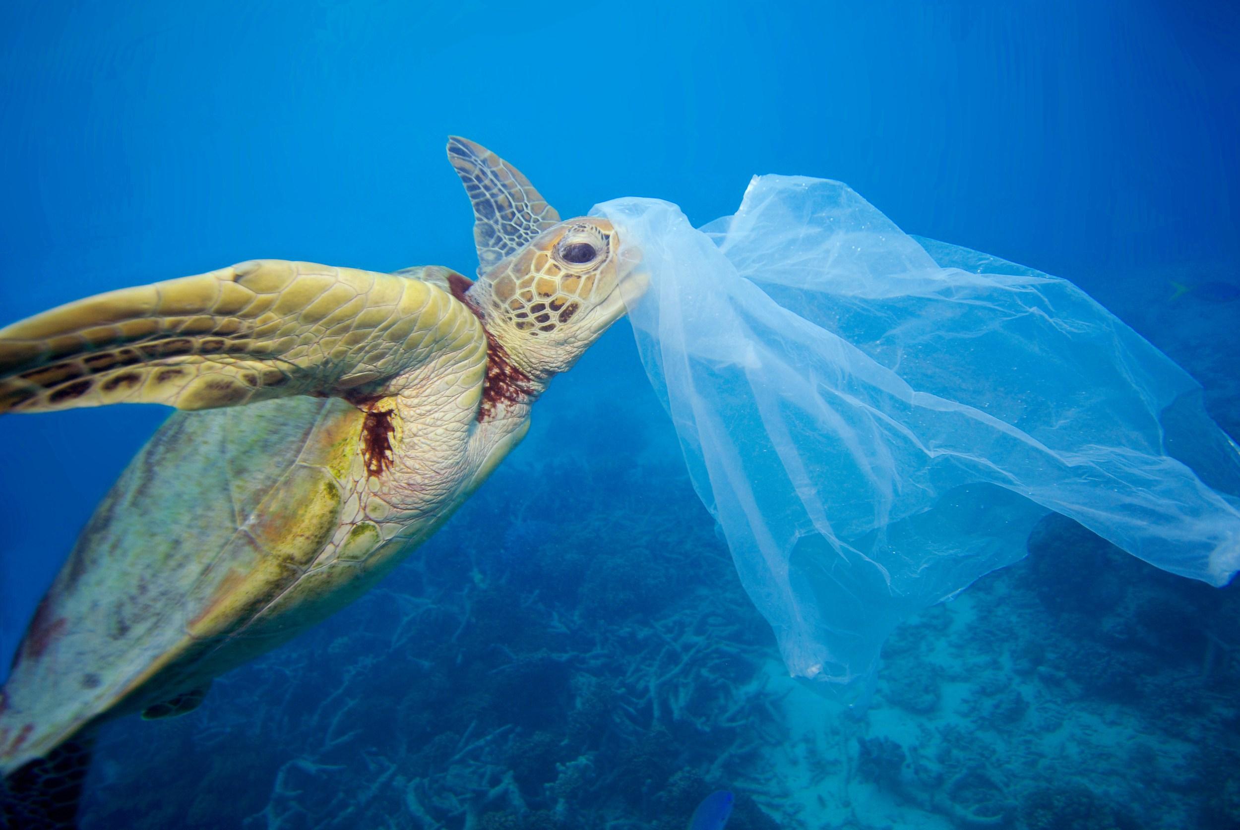 AMBIENTE: Dal 1 Settembre Lampedusa diventa Plastic Free